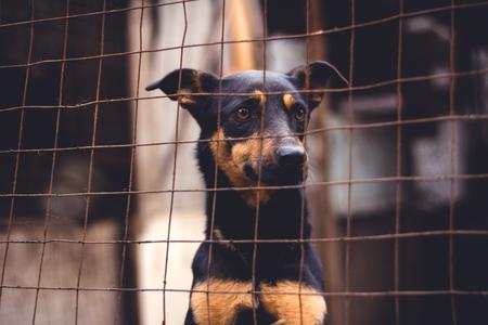 Shelter for homeless dogs, waiting for a new owner Reklamní fotografie