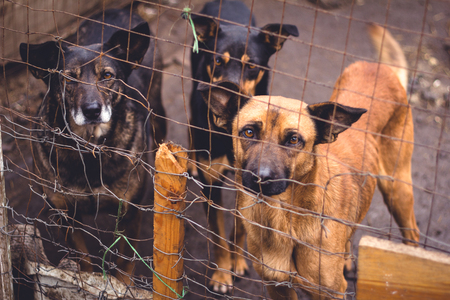 animal shelter: Shelter for homeless dogs, waiting for a new owner Stock Photo