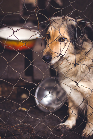 Shelter for homeless dogs, waiting for a new owner Banco de Imagens