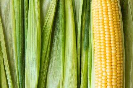 mazorca de maiz: Maduros granos de maíz amarillo en la mazorca y hojas verdes. De cerca.