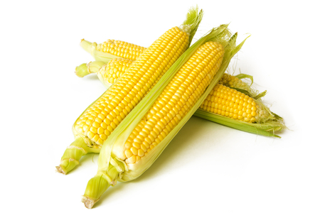 yellow corn: yellow corn on the cob isolated on white background