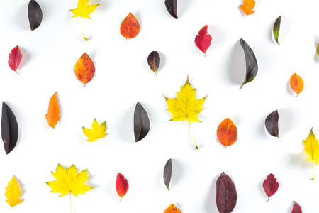 eberesche: collection of beautiful colorful autumn leaves isolated on white background. Space for text
