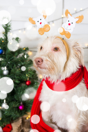 Dog wearing Christmas costume hat in snowflakes