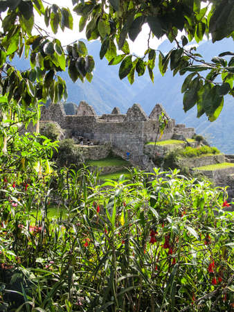 unesco: Machu Picchu landscape viewed through plants and tree