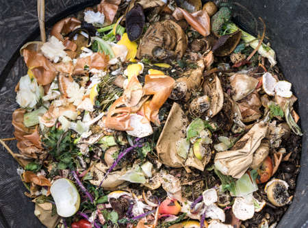 heap: Rotting vegetables in a wire compost bin.