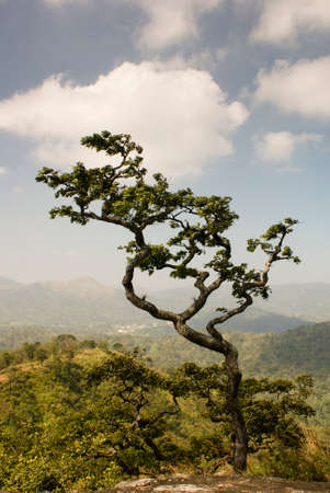 periyar: A lone tree with mountains in the background.