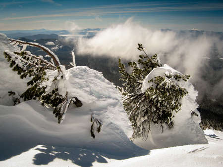 oregon cascades: snow buries a few trees on top of Mt. Bachelor with the cascades in the background.