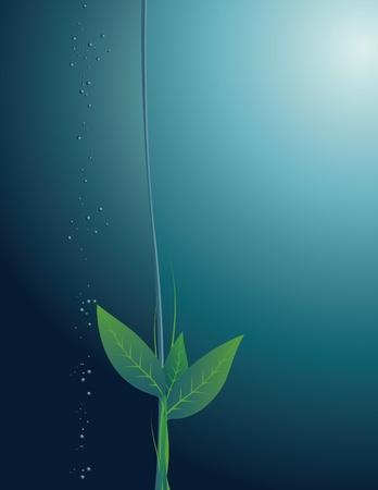 runaway: Runaway de una planta en un fondo del espesor girado de agua