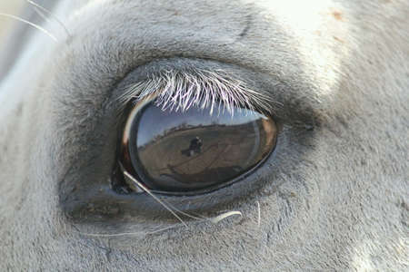 eye: Close up of an eye of a Horse Stock Photo