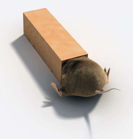 mouse trap: Mouse Trap Stock Photo