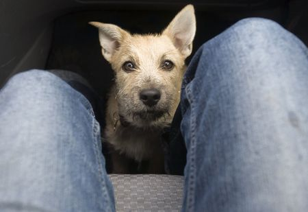 Young Dog on Car Floor
