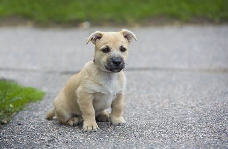 ballad: Young Dog on Road