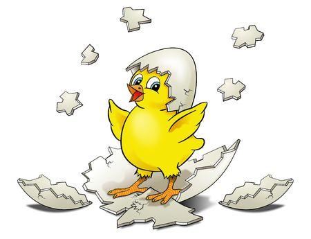 pollitos: Eclosi�n de pollo Foto de archivo
