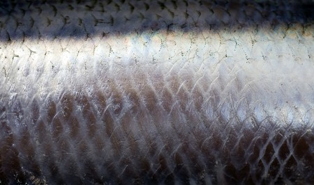 Herring Skin photo