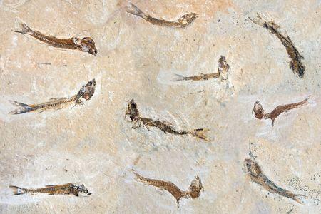 million: Fish Fossils 60 million years old