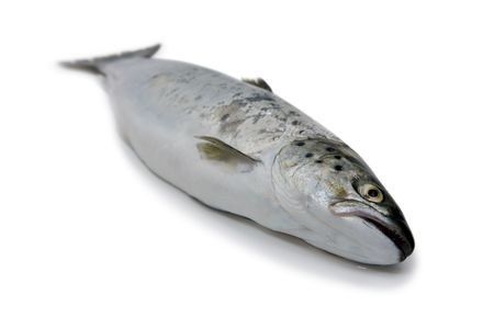Fish - Trout Body