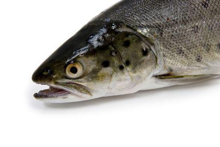 Fish - Trout Head Stock Photo - 4775319