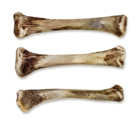 vertebrates: Bones - Isolated