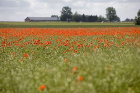 Landscape - Field of red Poppies Stock Photo - 5077780