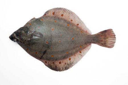 Flounder Plaice photo