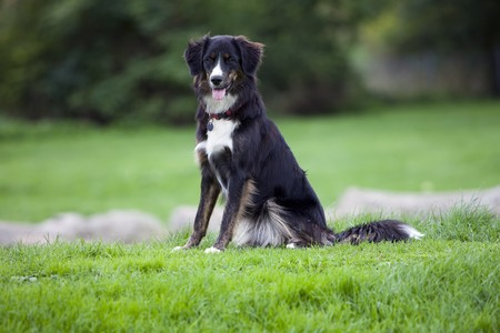 Dog - Sitting Happy Stock Photo