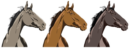 Horse portraits in three different colors