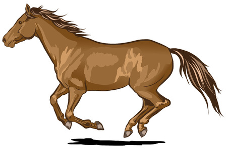 galloping: Single brown horse galloping at full speed