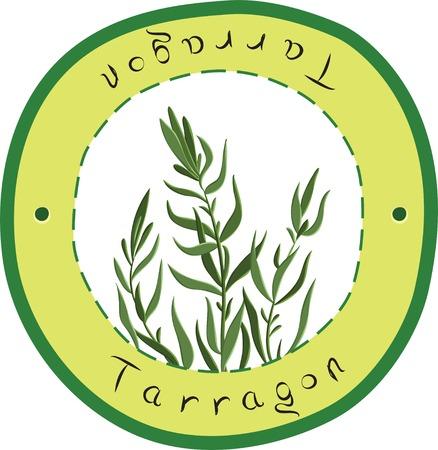 salatdressing: Vector Estragon Kraut in den Kreis. Estragon. Vektor-Illustration Illustration