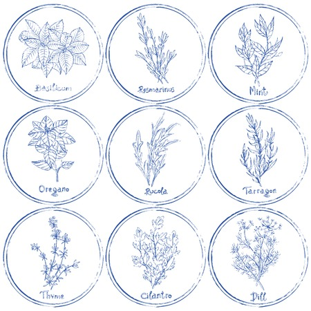 cilantro: Vector set of herbs. Stamp herbs set. Vector illustration