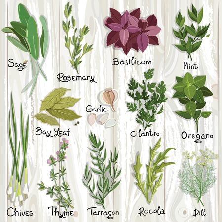 cebollines: Conjunto de vector hierbas y especias en la superficie de madera. Hierbas establecen. Ilustración vectorial