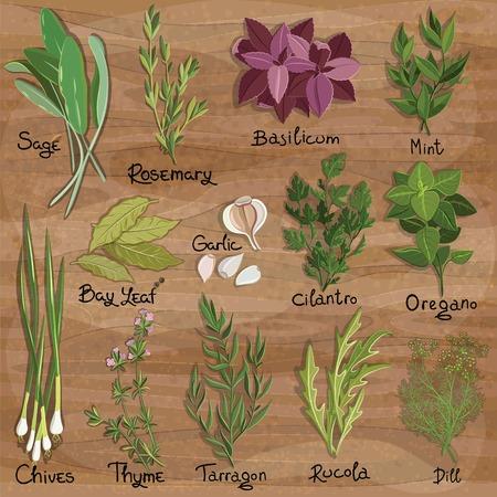 cebollin: Conjunto de vector hierbas y especias en la superficie de madera. Hierbas establecen. Ilustración vectorial