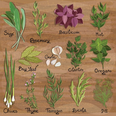 Set of vector herbs and spices on the wooden surface. Herbs set. Vector illustration Illustration