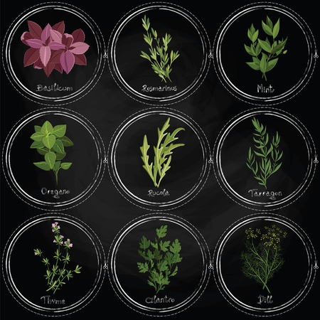 Vector colorful herbs on the surface of the slate with frames painted with chalk. Dark herbs set. Vector illustration Stock Illustratie
