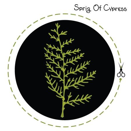 a sprig: Vector cypress sprig. Cypress sprig. Vector illustration
