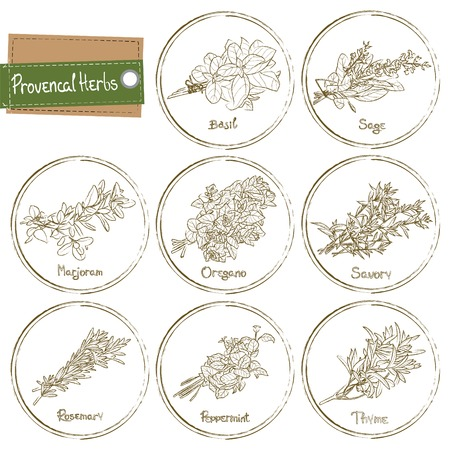 thyme: Provencal Herbs set. Provencal Herbs. Vector illustration Illustration