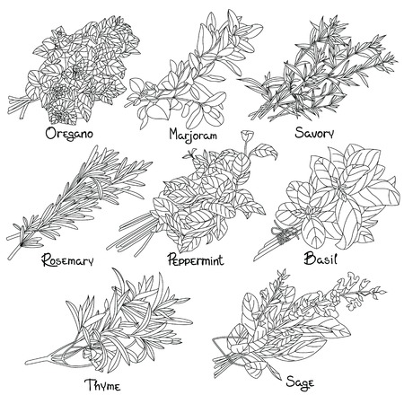 Provencal Herbs outline set. Outline Herbs. Vector illustration