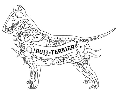 bull dog: Stylized skeleton Bull Terrier. Outline Bull Terrier. Illustration