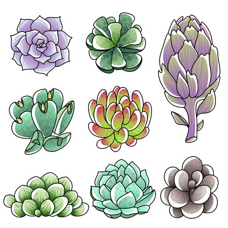 botanical gardens: Isolated colored succulents