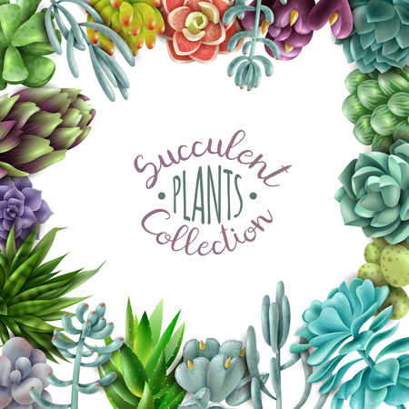 Square frame of succulents. Succulent plants collection. Vector illustration