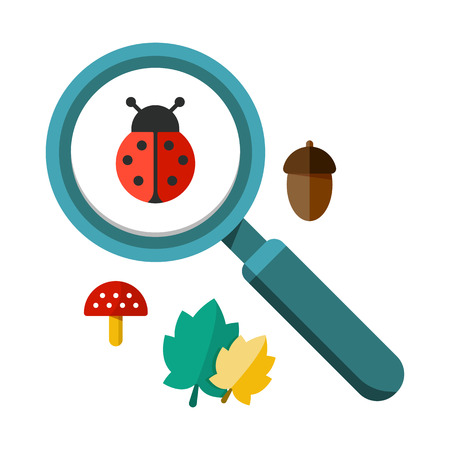 lense: Vector illustration of a ladybug by a magnifying glass. Insect under magnifier zoom lense. Flat design vector. For web and applications