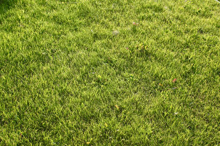 Beautiful neatly groomed green gas grass An effective and neatly trimmed well-groomed green lawn