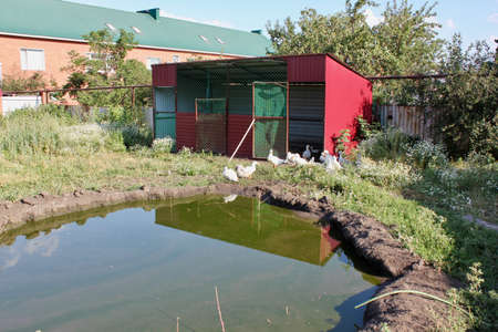 Pond for domestic geese and cottage, Domestic organic farm
