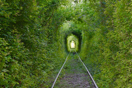 The Arch of Love. Wonders of nature. A natural arch formed by intertwined trees above a railway. Arch of Green tunnel of trees in the forest . Tunnel of love. Russia