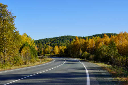 Autumnal Park. Autumn Trees and Leaves. Fall. Golden green orange leaves. Golden birch. The road going far away through the golden magic forest