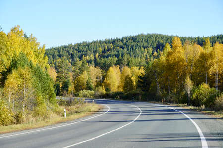 Autumnal Park. Autumn Trees and Leaves. Fall. Golden green orange leaves. Golden birch. The road going far away through the golden magic forest Banque d'images