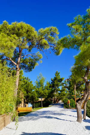 Beautiful snow-white beach with Maldivian sand surrounded by huge pines. Very atmospheric place. Luxury vacation in hotel Lujo in Turkey Archivio Fotografico