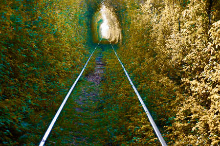 The Arch of Love in South Ural, Russia. Autumn yellow and green tunnel of trees in the forest . Tunnel of love. Majestic golden Autumn