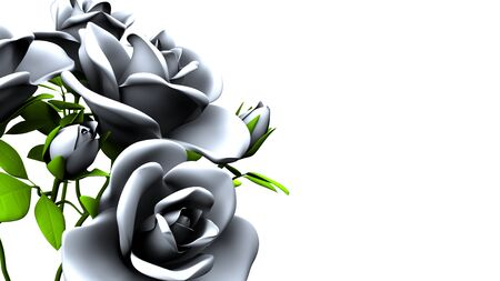White roses  bouquet on white text space 写真素材