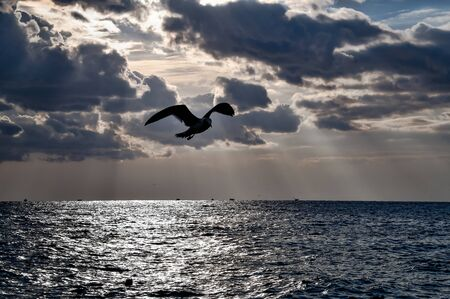 Seagull Flying Over the Sea. Seagull Flying Over the Sea. Epic Dramatic Sunset.