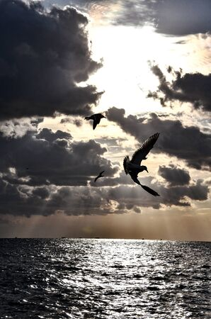Seagulls Flying Over the Sea. Seagulls Flying Over the Sea. Epic Dramatic Sunset.